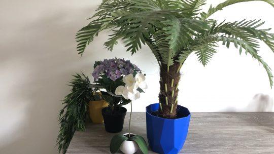 Binnen planten